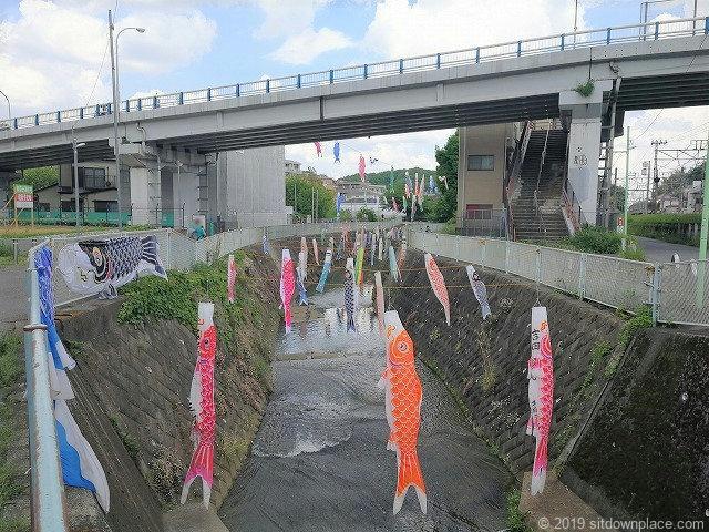 五反田川生田駅付近の鯉のぼり