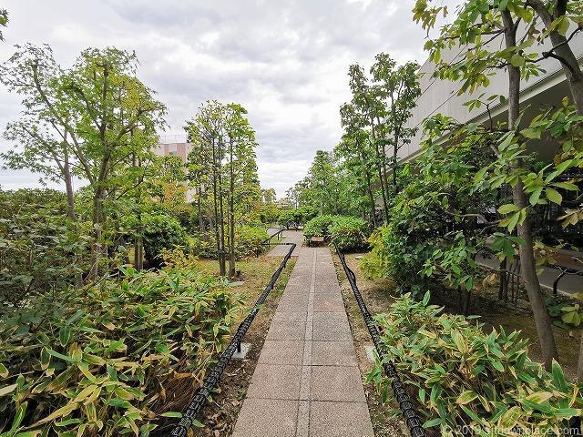 成城コルティ4F屋上庭園雑木林の丘