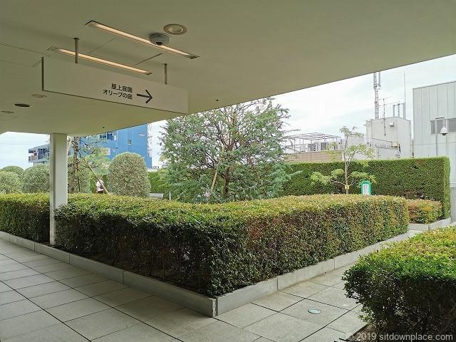 成城コルティ4F屋上庭園オリーブの庭