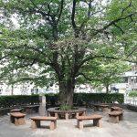 【立川駅】立川北口公園の休憩場所