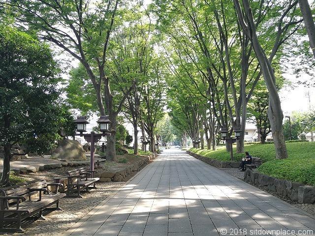 氷川参道の景観