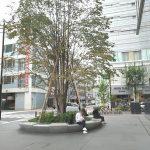 【銀座駅】GINZA SIX(銀座シックス)CITIZEN前の休憩場所
