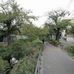 【下北沢駅】北沢川緑道の休憩場所
