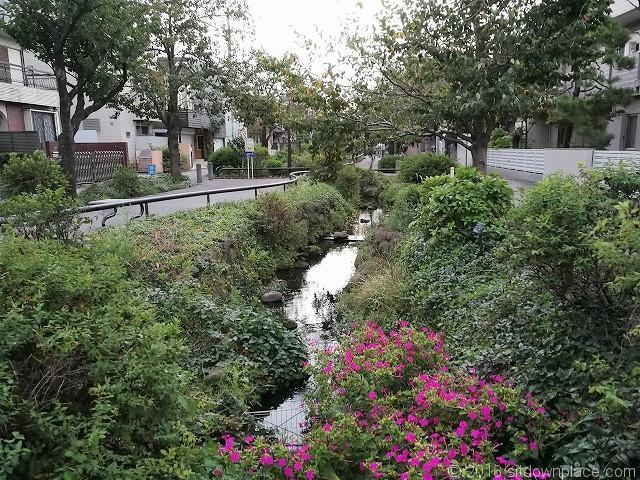 北沢川緑道橋からの景観