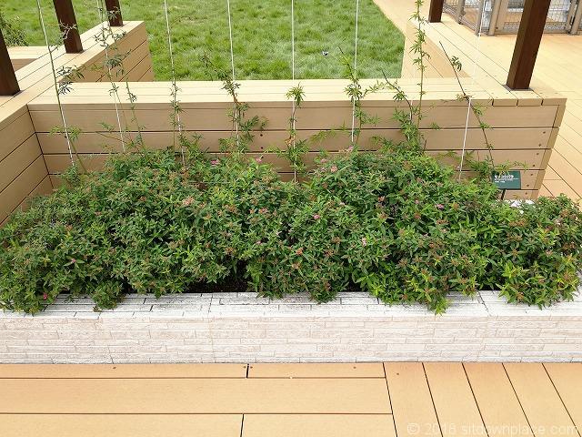 北沢タウンホール5F屋上庭園の花壇
