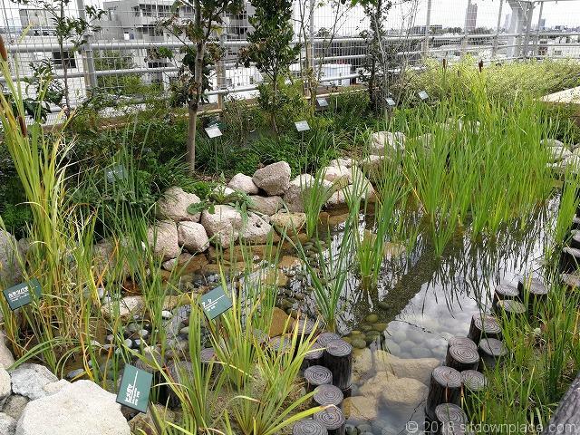 北沢タウンホール5F屋上庭園のビオトープ