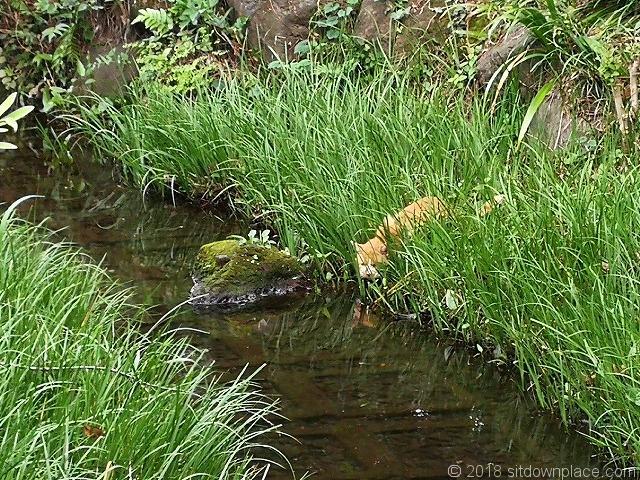 洗足池の魚を狙う野良猫