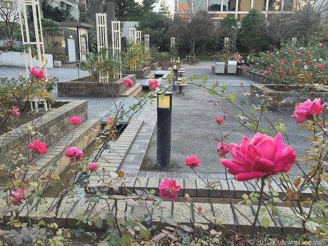 赤坂氷川公園のバラ