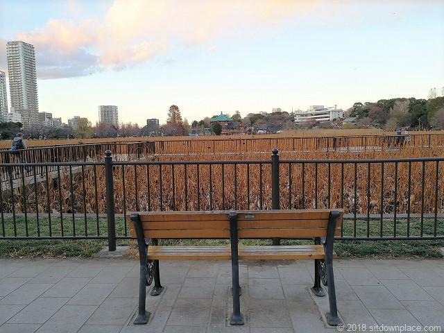 不忍池の池周辺のベンチからの景観