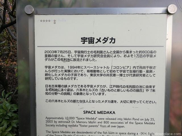 毛利庭園の宇宙メダカSPACE-MEDAKA