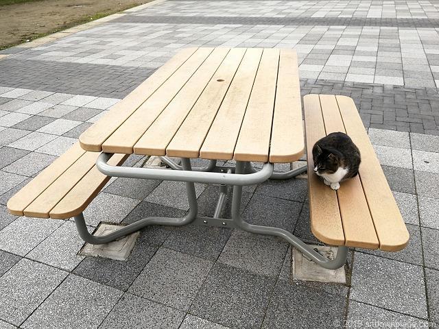 佐原駅南口交番横のテーブルと猫