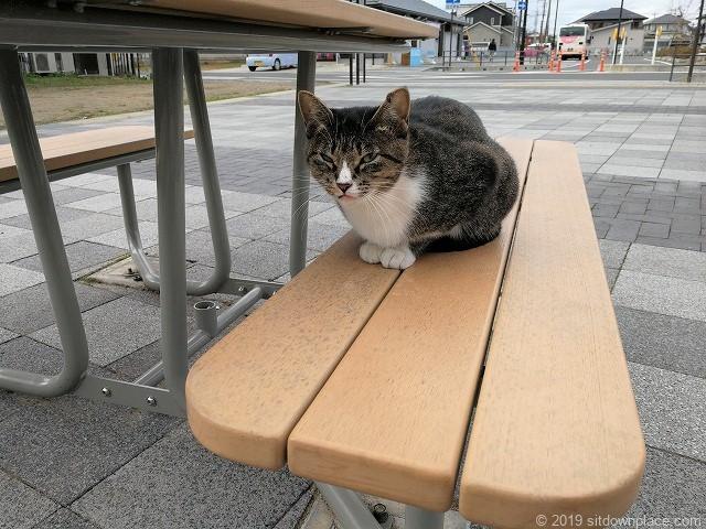 佐原駅南口交番横のテーブルに座る猫