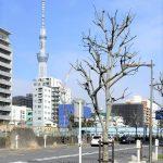 【錦糸町駅】横十間川天神橋付近の休憩場所