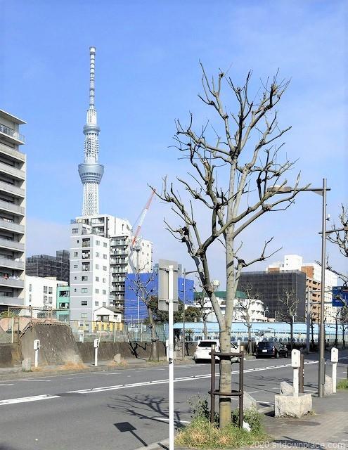 錦糸町駅横十間川天神橋付近の休憩場所から見えるスカイツリー