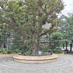 【武蔵小杉駅】ミッドスカイタワー グランツリー前の休憩場所