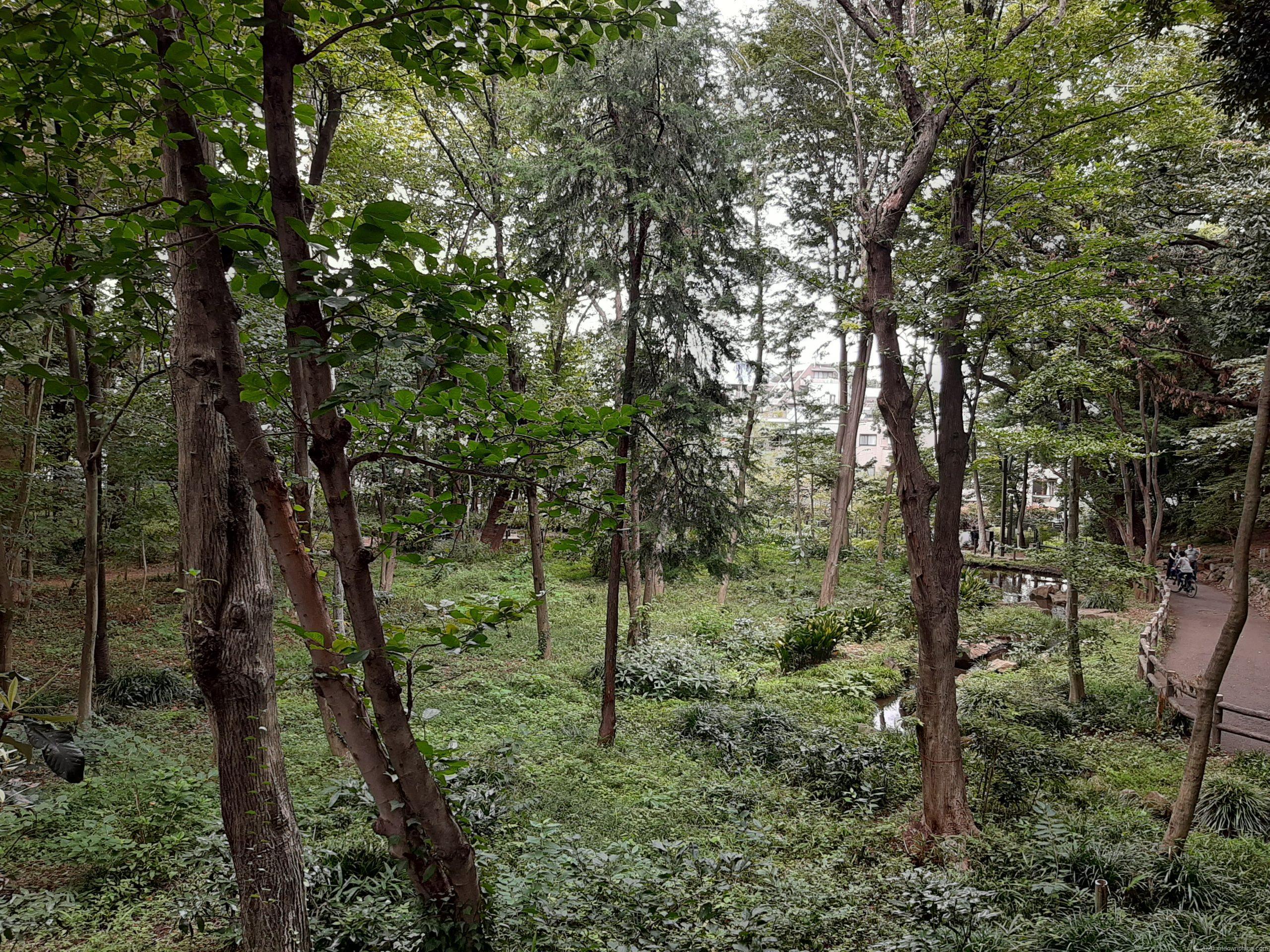 林試の森公園の緑豊かな園内