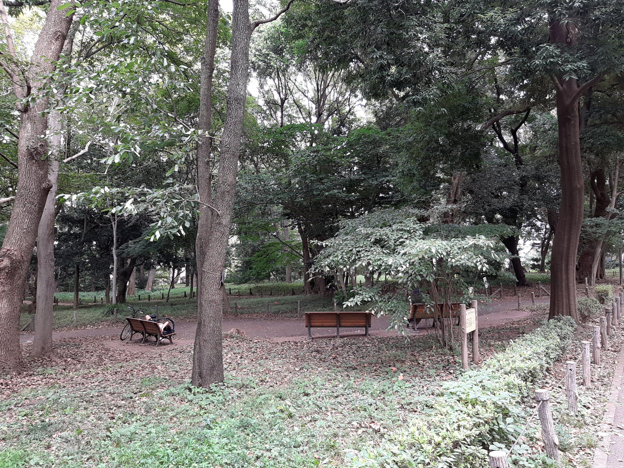 林試の森公園の森の中のベンチ