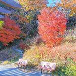 【新百合ヶ丘駅】万福寺おやしろ公園 みんなの丘の休憩場所