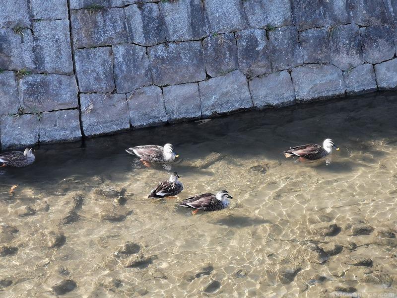 中野島駅二ヶ領用水 一本圦橋付近の休憩場所その2